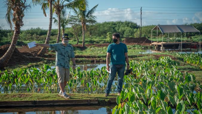 two people walking on a bridge next to taro plants