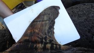 dead whale fin