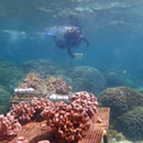 Marine biology student receives nation's premier conservation fellowship