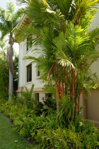 palm tree with red stems