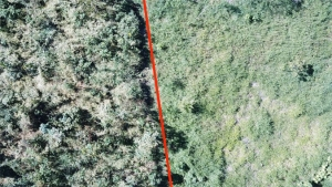 aerial view of forests and grasses