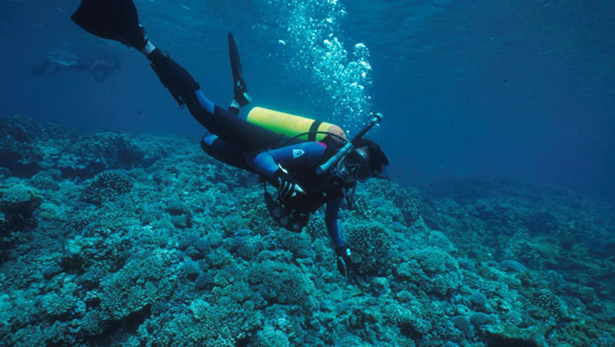 Experts aim to keep coral reefs from dying off