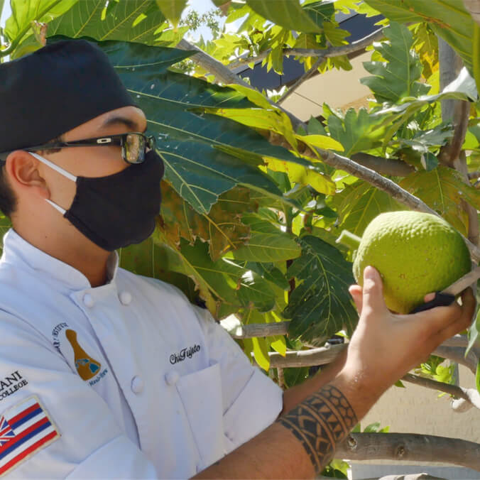 Undergraduate ʻulu research yields innovative recipes, hopes for other local crops