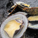 ʻOpihi growth patterns influenced by Hawaiian intertidal environment