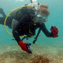 UH Sea Grant shares in award to address marine debris, protect wildlife