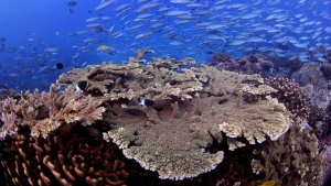 coral colony with fish swimming around it