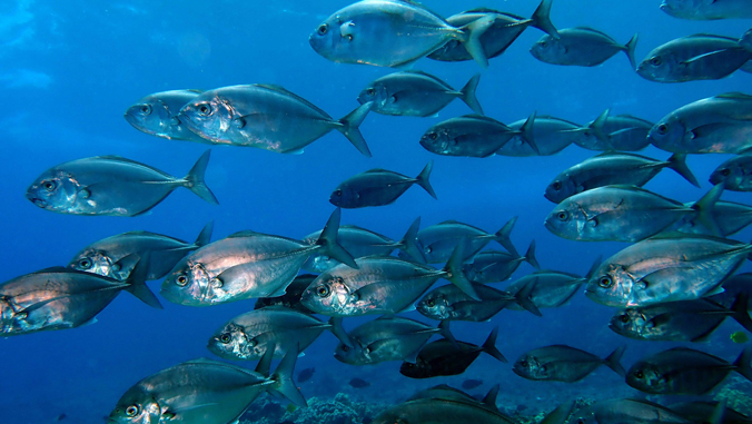 group of fish swimming in the water