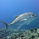 Marine expert says more, larger protected areas needed in Hawaiʻi