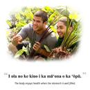 Hawaiian language website, more webinars for help with hunger, housing