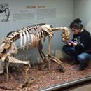 Extinct ground sloth was an omnivore, not vegetarian