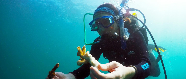 Scuba Diver Examining Coral