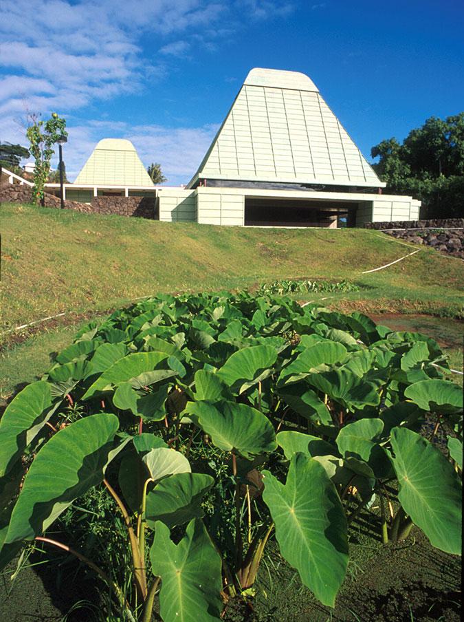 Taro in front of the Hawaiinuiakea School of Hawaiian Knowledge buildings
