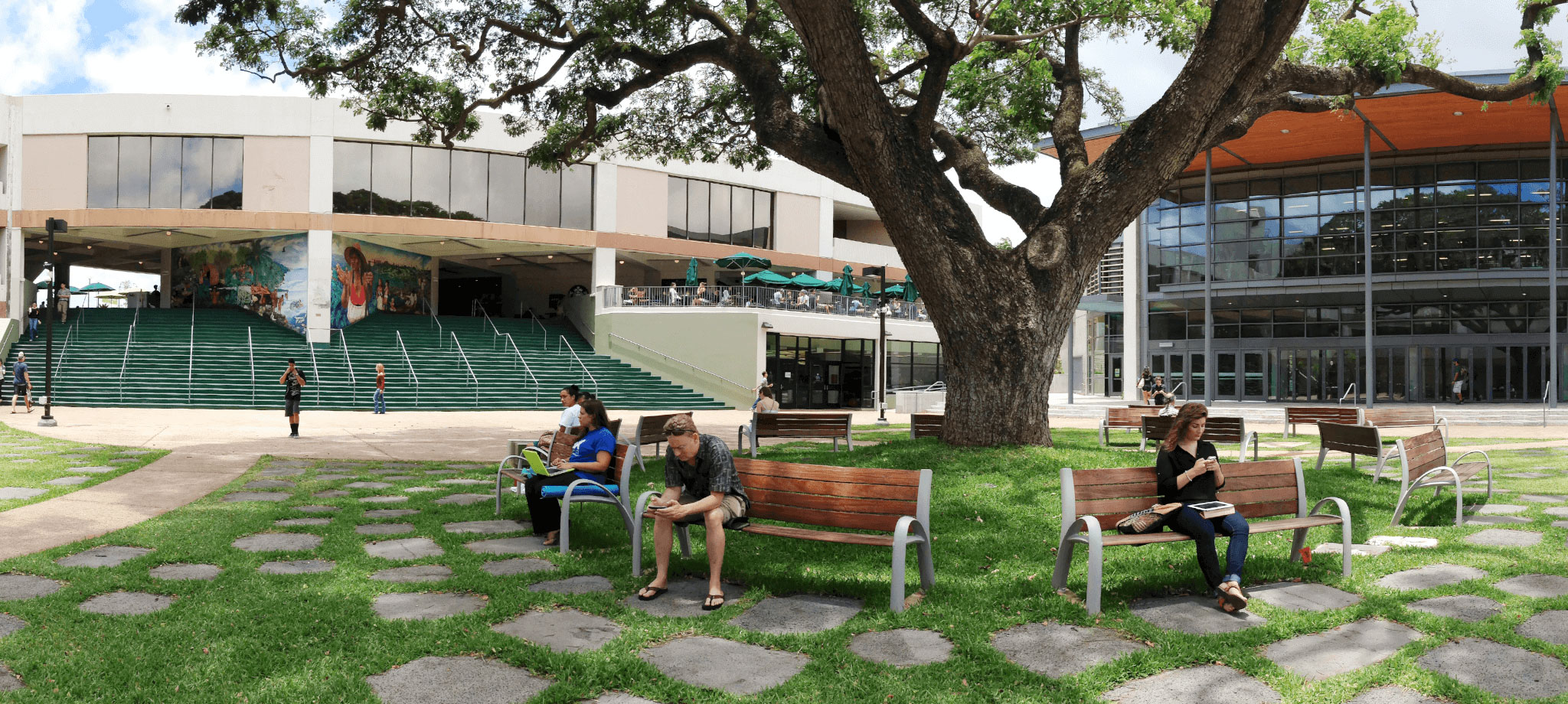 Manoa Campus Center Mall With Huge Tree